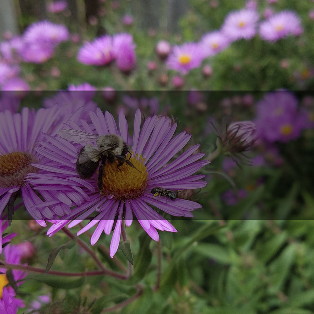 Choose a pre-planned habitat garden and we'll install it for you. - pre-planned