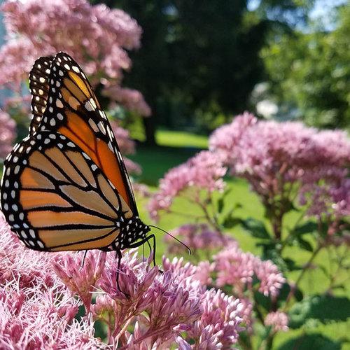 PLAN it WILD PrePlanned Gardens Make it Your Own PLANitWILD – Pre Planned Butterfly Garden