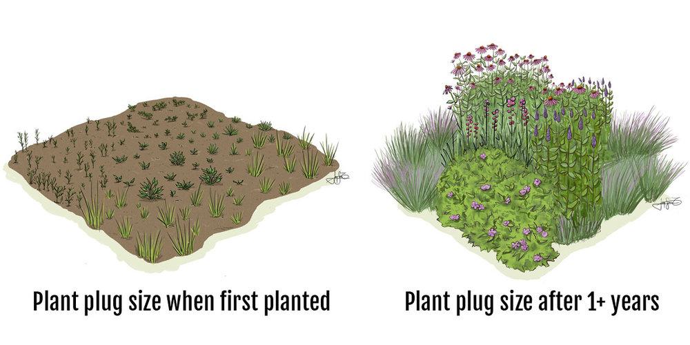 Plug Graphic.jpg
