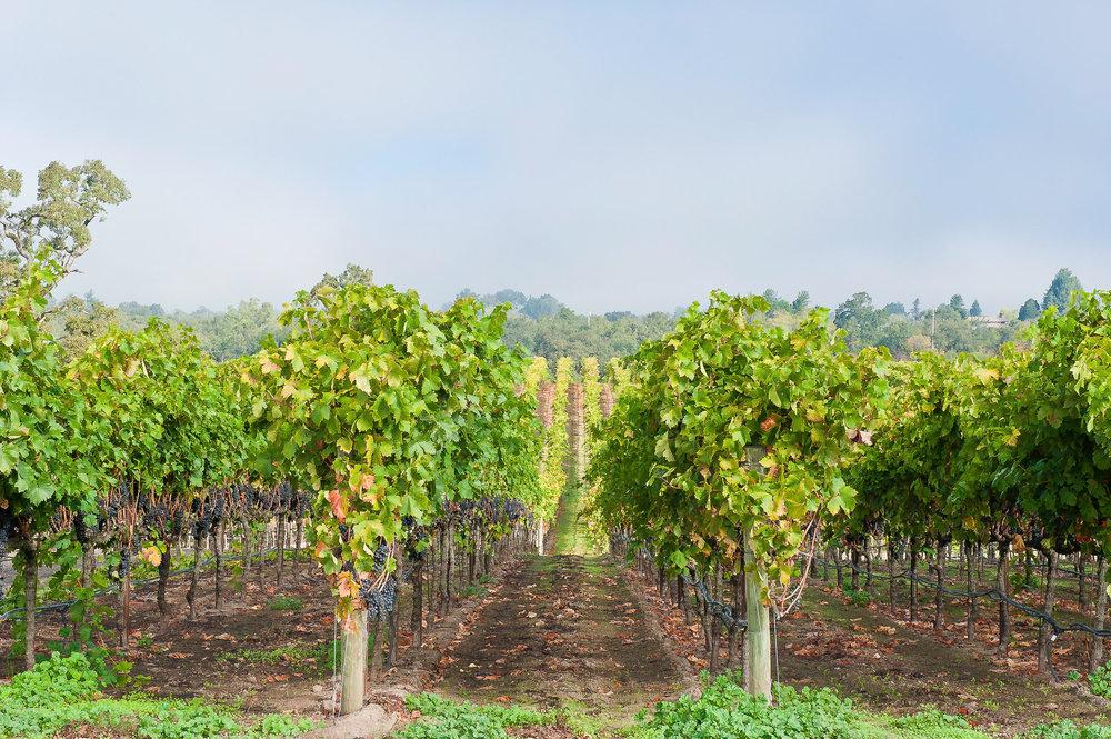 Santa Rosa Plains -
