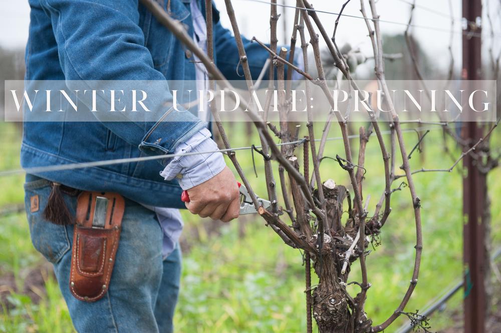 pruning vineyards title.png