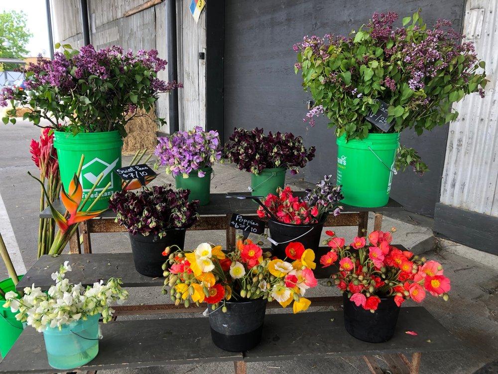 sonoma flower mart 1.JPG