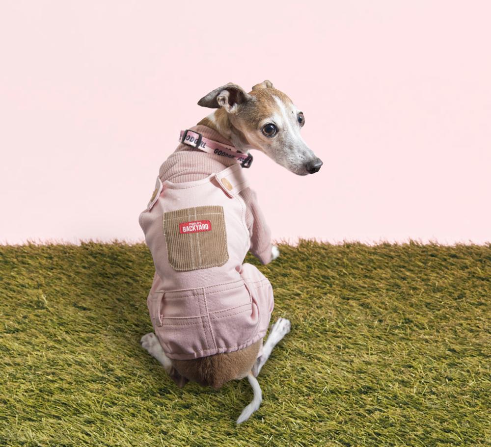 Meet Chelsea - Age: 10 YearsBreed: Italian GreyhoundHometown: Toronto, ONInstagram: @IggyChelseaAndMe