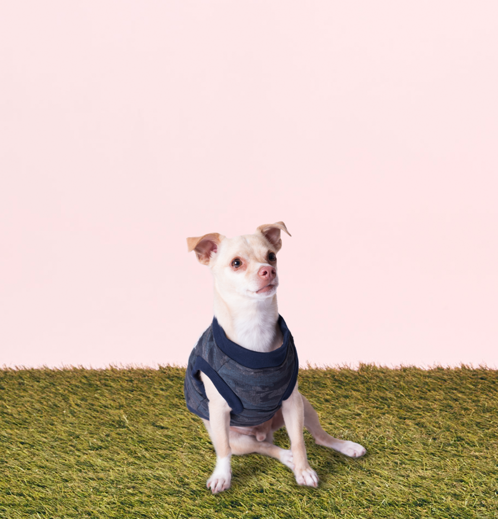 Meet Max - Age: 3 Years OldBreed: Chihuahua mixHometown: Toronto, ON