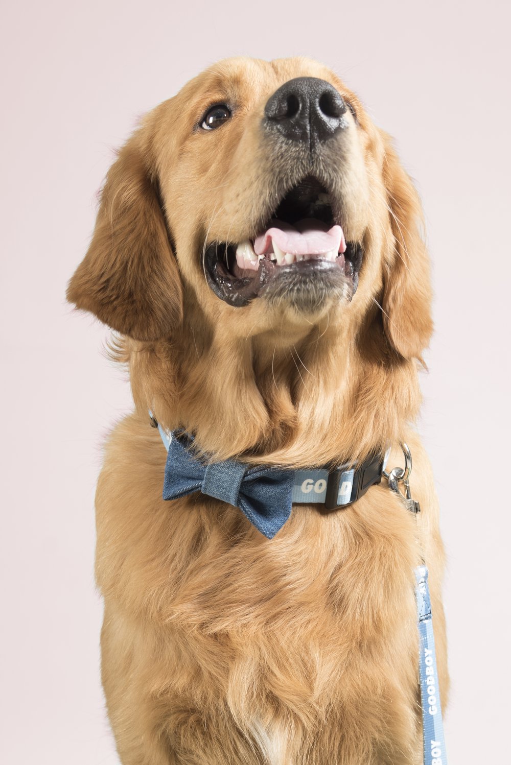 SIMPLY SUZETTE - DOGGIE BOWTIE - DARK DENIM