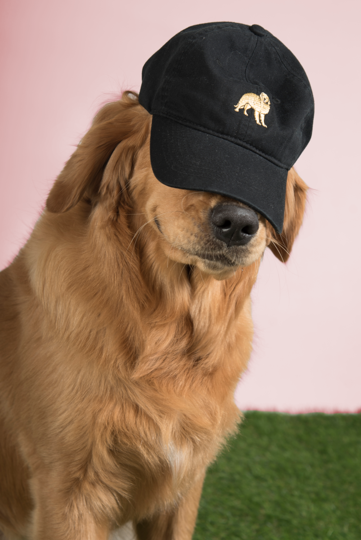DOG LIMITED - GOLDEN RETRIEVER DAD HAT - BLACK