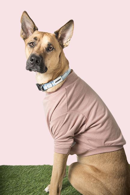 Meet Dawson the Boxsky - Age: 19 monthsBreed: Siberian Husky + BoxerHometown: Toronto, ON