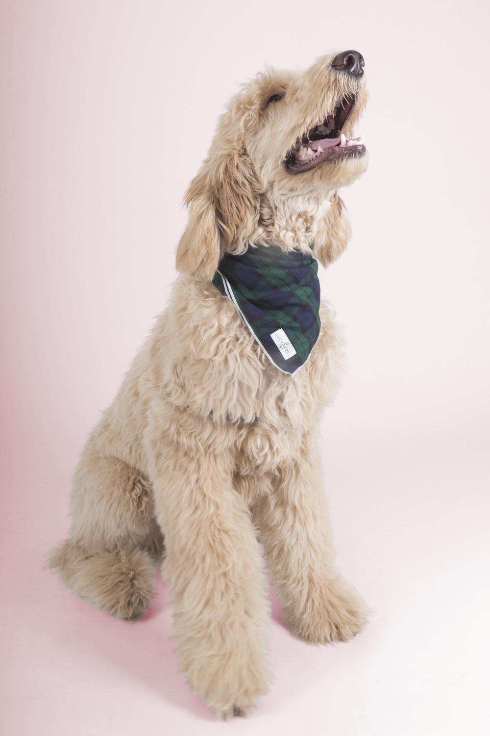 Benny's dream date - Benny enjoys long walks on the Beltline, chasing squirrels, while sporting his new favourite bandana he got from The Goodboy Shop.  Check out the video below for more Benny!