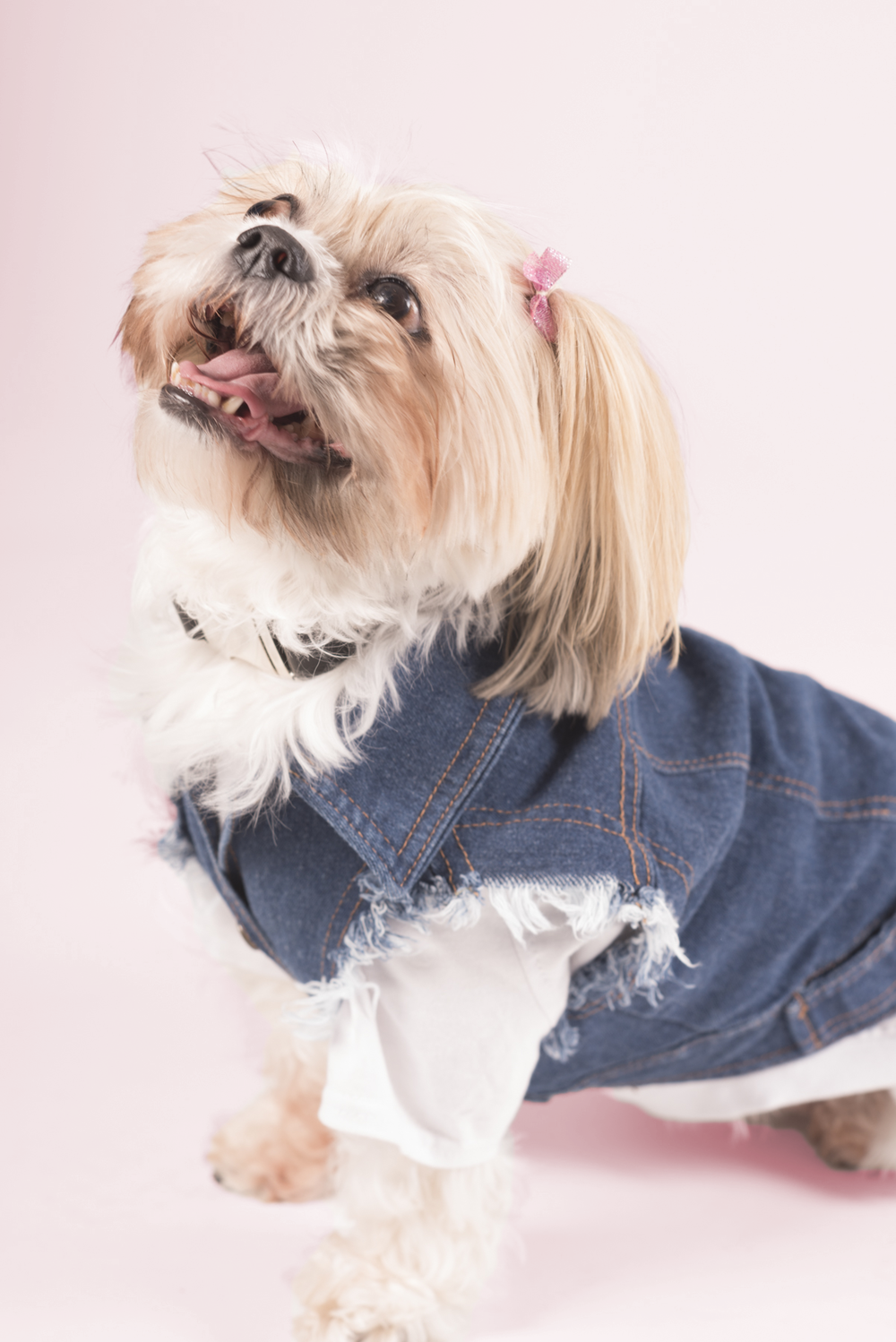 Meet Hazel. - Age: 7 years Breed: Shih-TzuHometown: Toronto, ON
