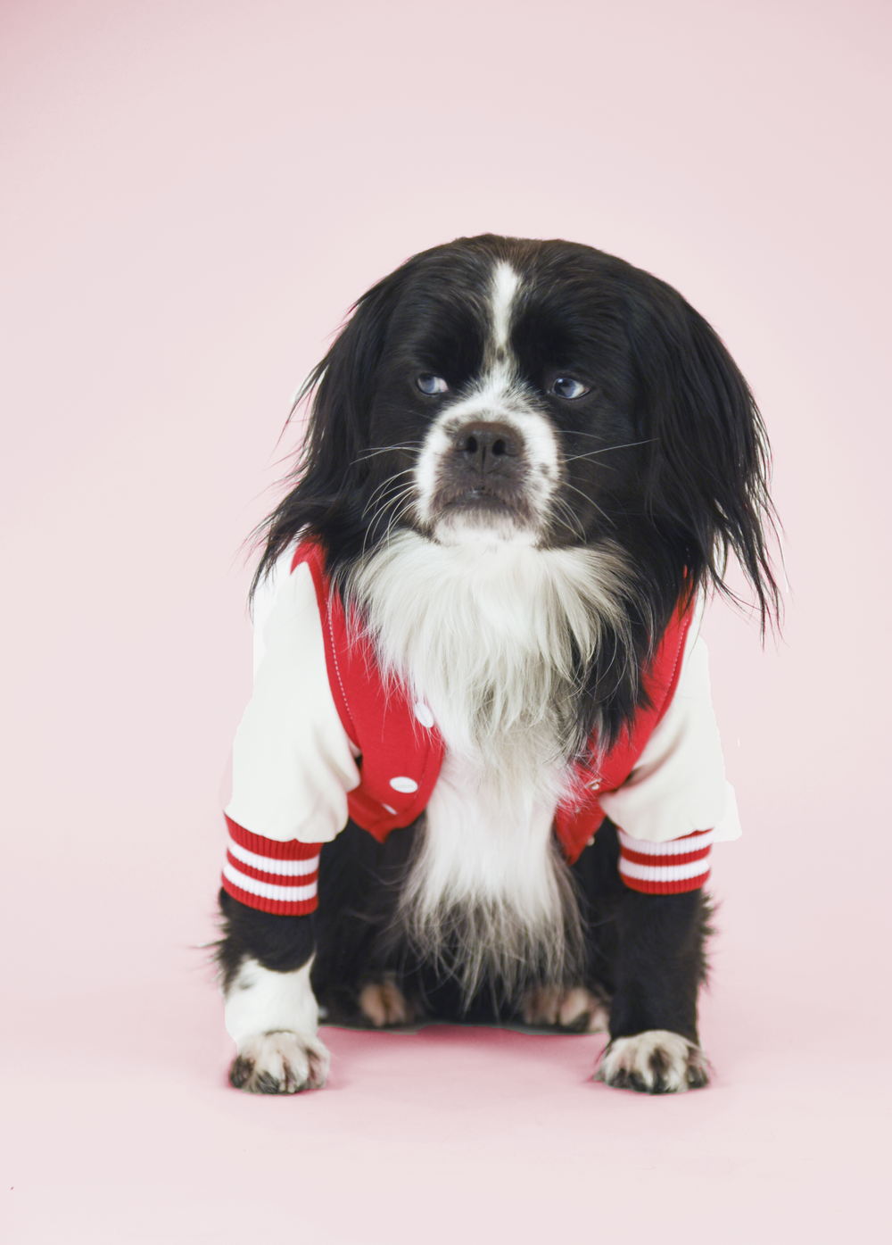 Meet Roscoe. - Age: 2 years oldBreed: Pekingese/Border Collie MixHometown: Toronto, ON