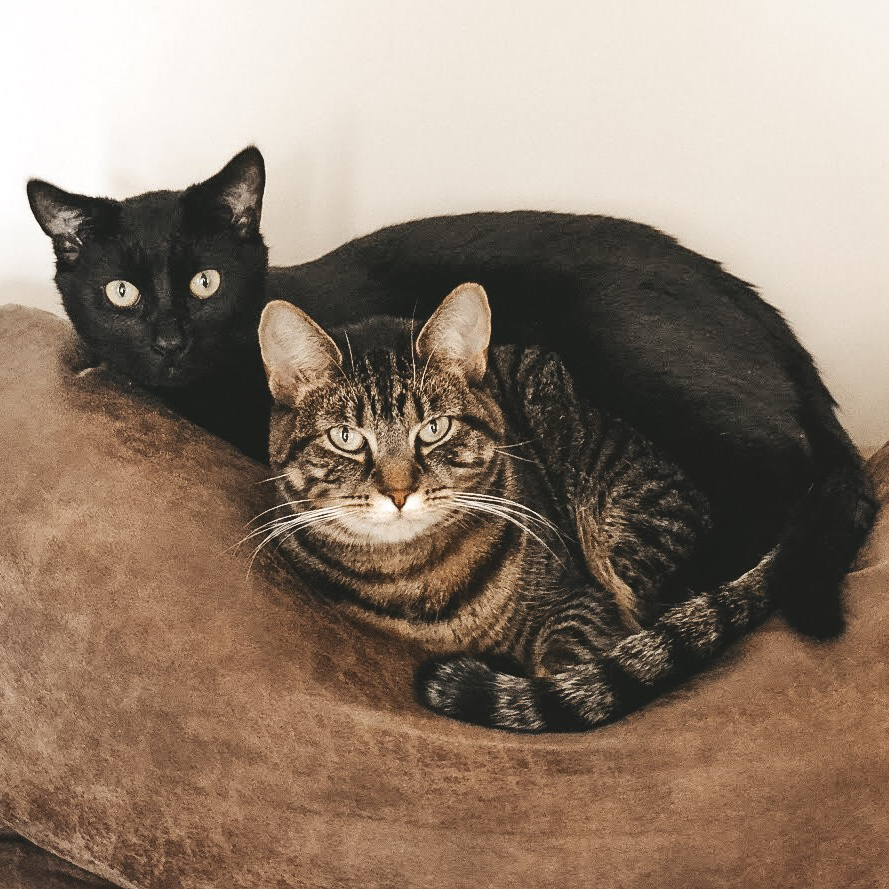 Jade & Jasper - Jade is a four year old tabby cat. I rescued her at 12 weeks old in my junior year in college. Jasper (also known as