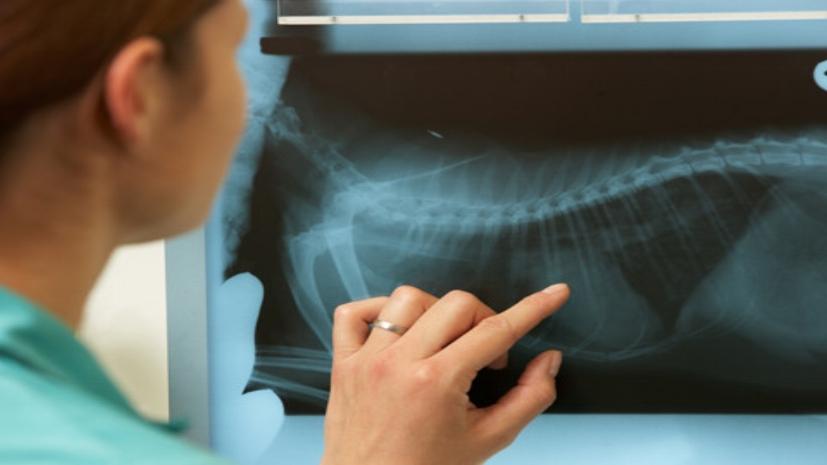 Radiology-480x350.jpg