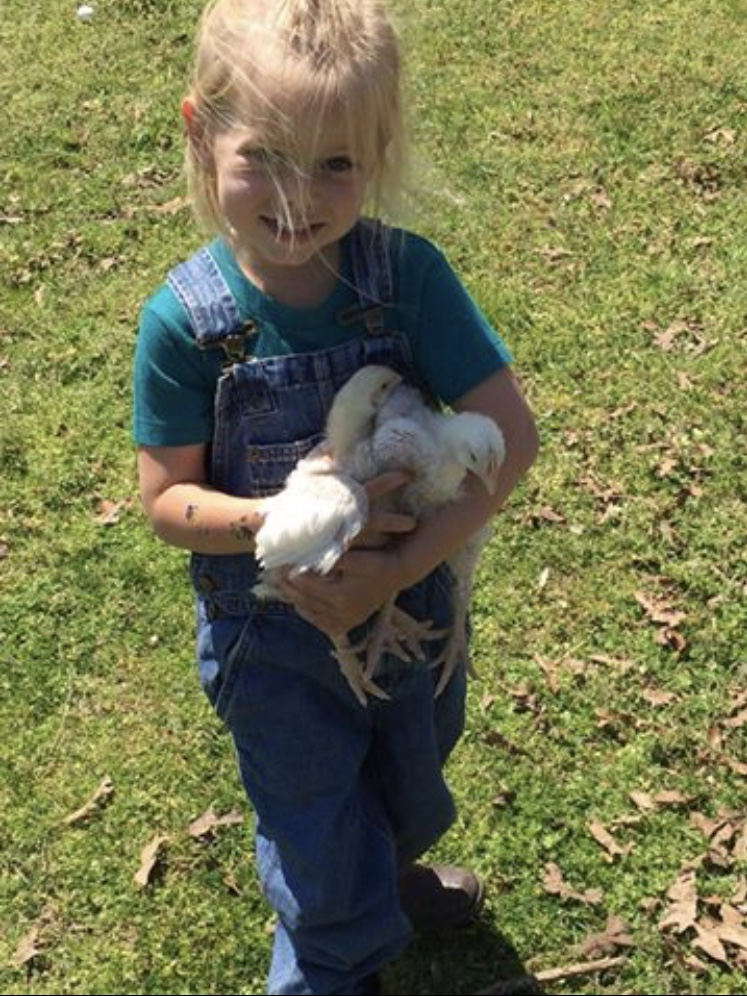 Our oldest, Tucker, taking our broilers from brooder to pen.