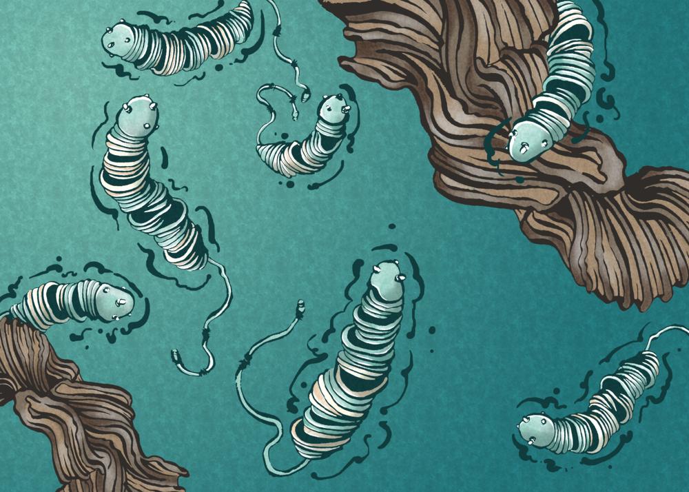 9 Bacteria.png