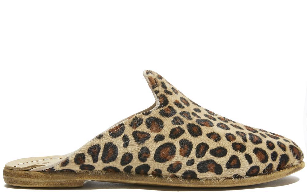 Sabah Baba Leopard