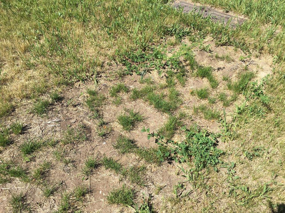 Restlawn weedy grave.JPG