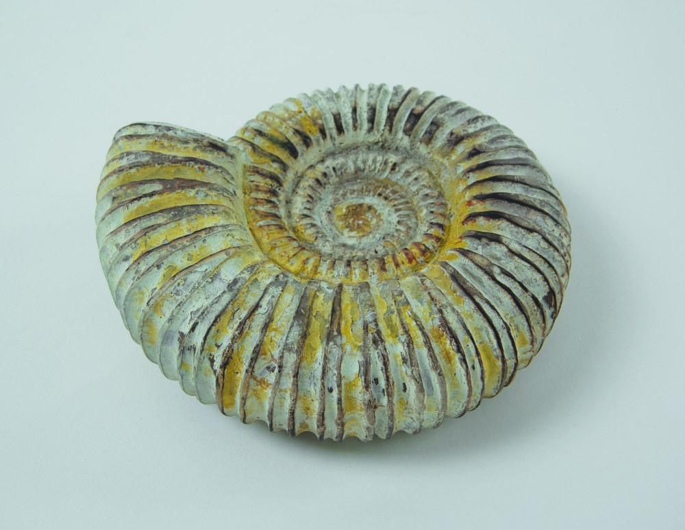 AmmoniteFossilback300.jpg