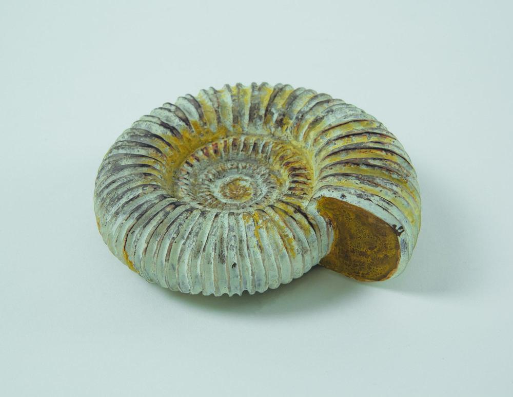 AmmoniteFossilfront300.jpg