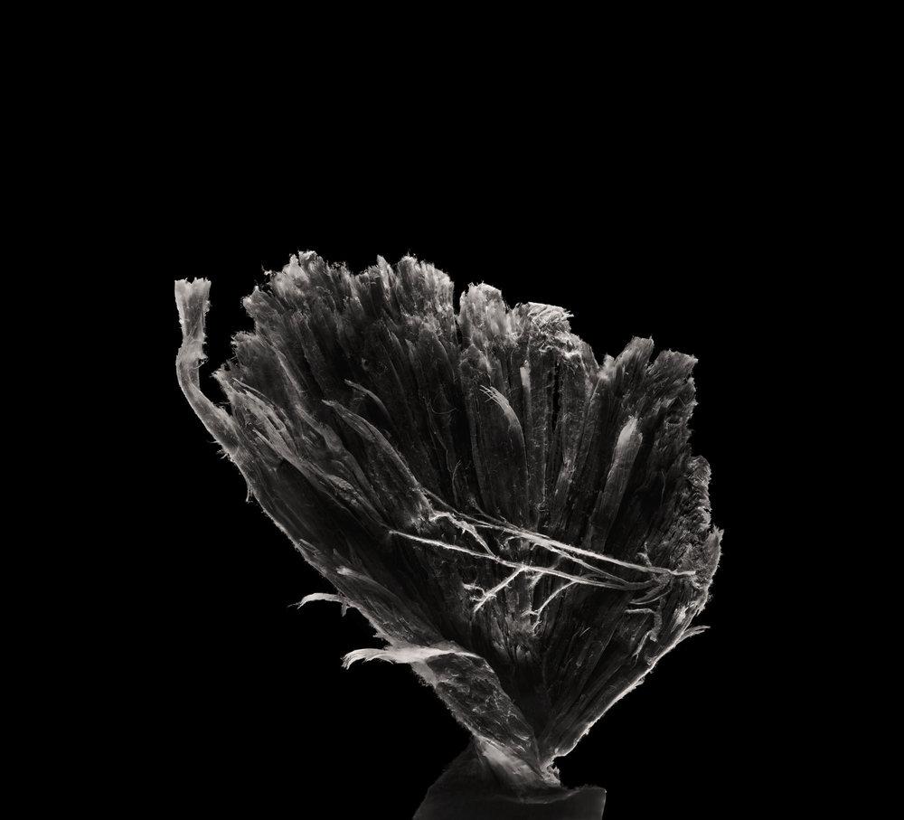 陳的表示,拍攝後才發現,主體在畫面的位置很多都從下至上,有如生命從地面萌芽一樣。   胸大肌Pectoralis Major muscle
