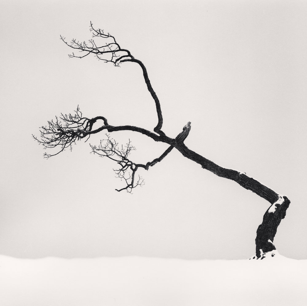 "©Michael Kenna ""Kussharo Lake Tree, Study 6, Kotan, Hokkaido, Japan, 2007"