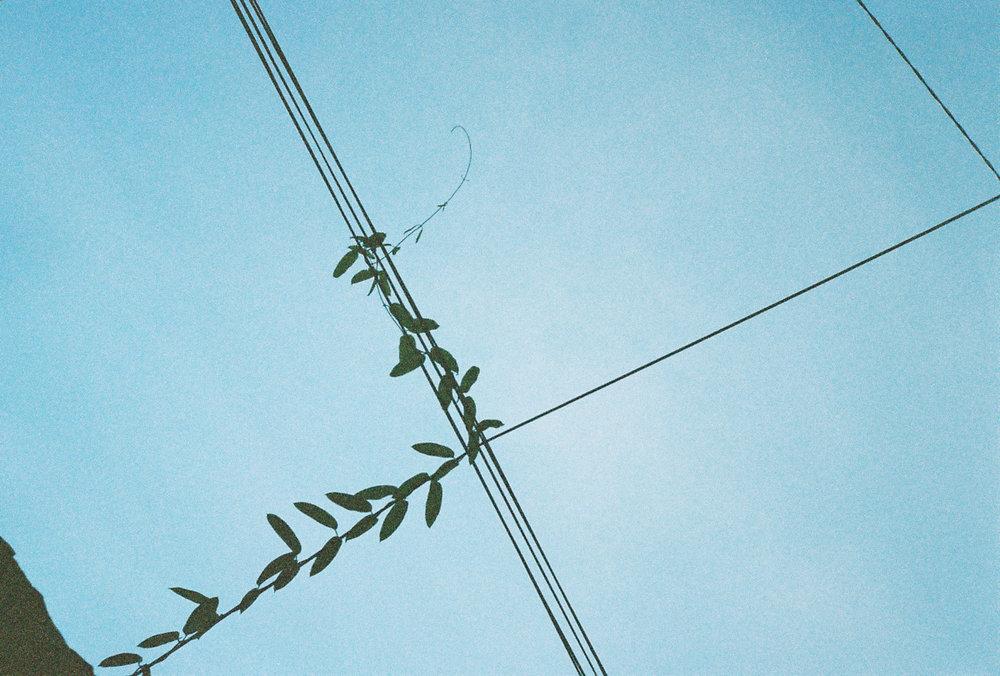 ©李佩禎,《縫生 The living Seam》