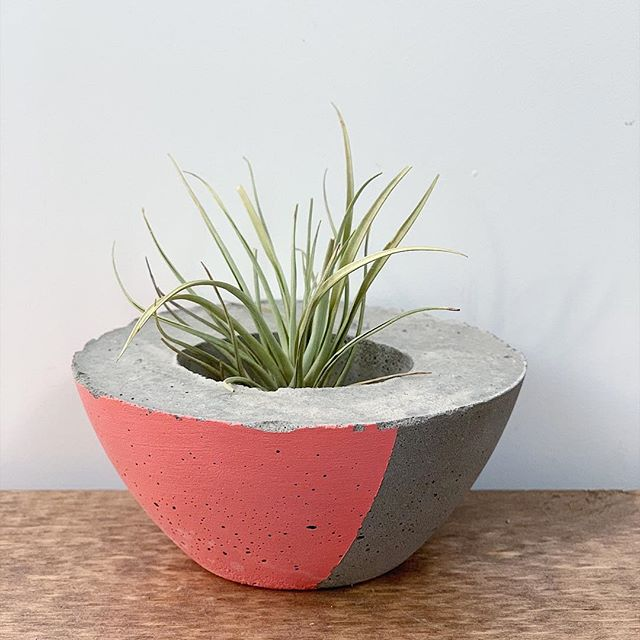 Our planters make the perfect home for air plants!  #airplant #planter #plantlove #concretedecor #concreteplanter #concrete  #denvermade #coloradomakers #crestandstone #plantsofinstagram #plantlover #plantlove