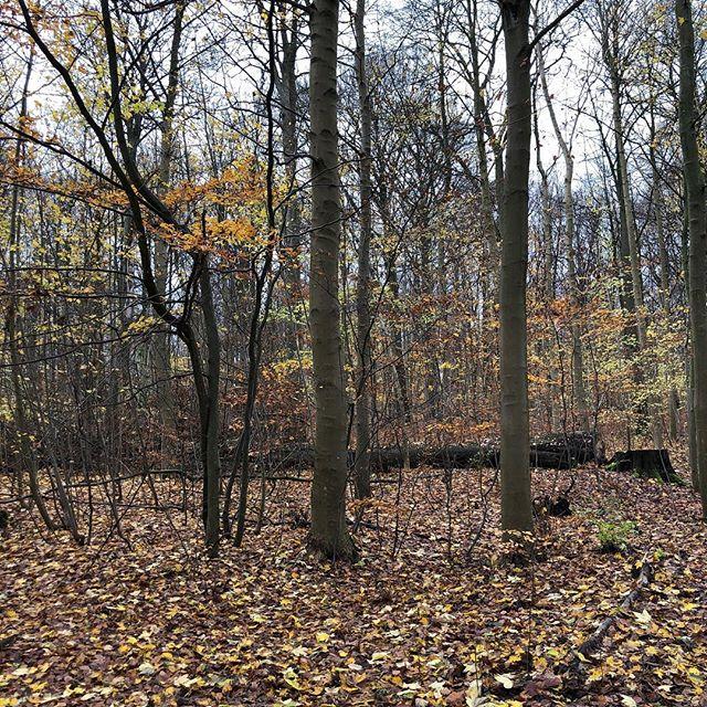 Efteråret er ikke en undskyldning, nærmere en grund til at komme ud! Nyd duften af natur, ikke parfume. Frogskin. #frogskindk #løb #cykel #vaskemiddel