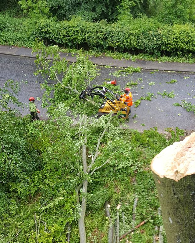 A spot of #trafficmanagement with Class One on the lights. Brief full road-closures were used to keep traffic moving and motorists safe while we dismantled a couple of very large, mature beech #trees for one of our estate clients. Our #Vermeer #skidsteer meant shorter waits for patient motorists, and not so patient Audi drivers!  #estatework #roadsidetrees #dangeroustrees #treelife #arblife #removal #tree #treebiz #beech #workclimb #srt #arb