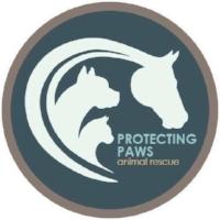 Protecting Paws.jpg