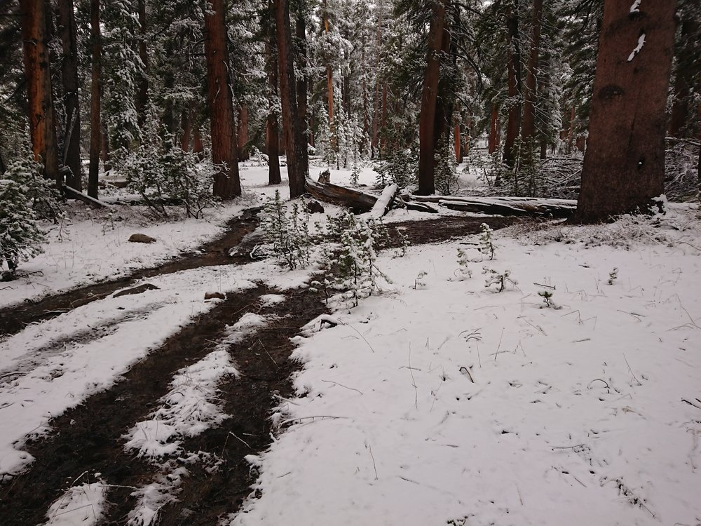 The fresh snow is easily visible in the fforest