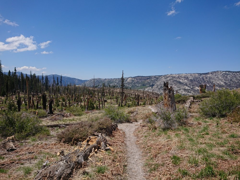 After getting back to the PCT we hiked in true summer conditions for quite some time