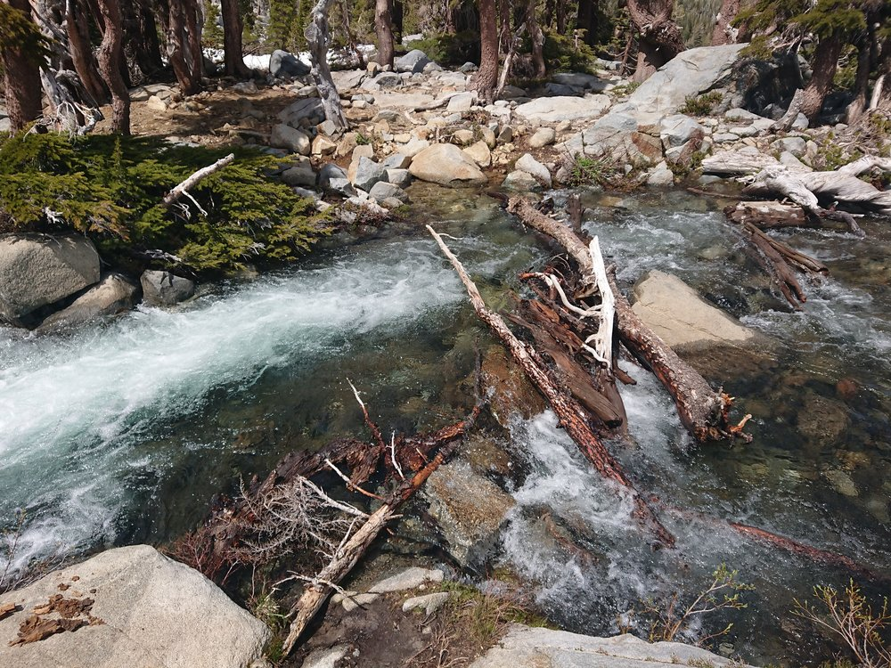 "A very interesting log ""bridge"" to cross with dry feet"