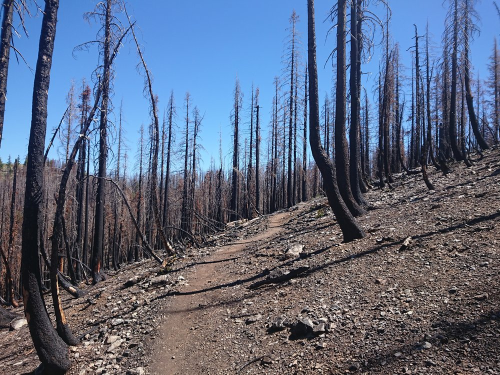 For a lot of miles I was walking in a burn area. This is always quite sad