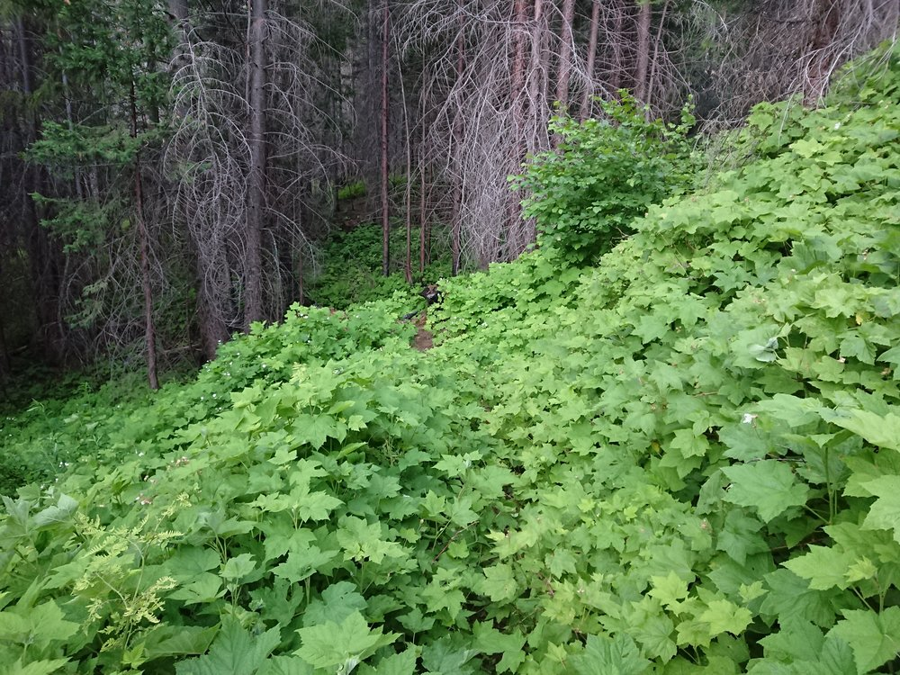 Let's play spot the trail. Sometimes the trail can be very overgrown