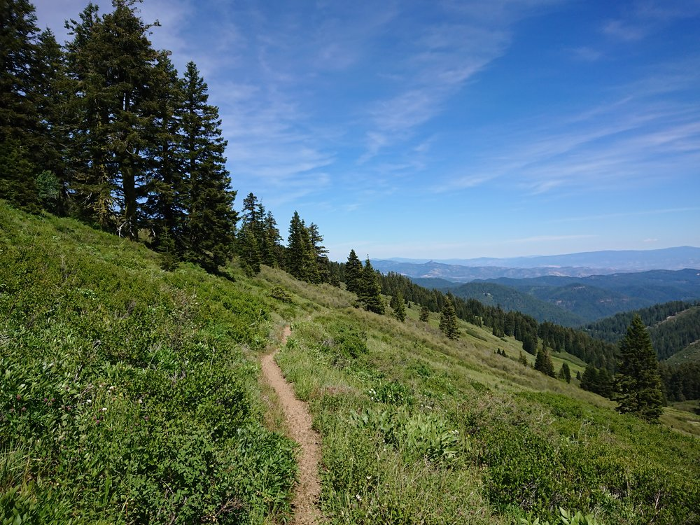A particular beautiful part of the days hiking in Oregon. There seems to be a lot of green now