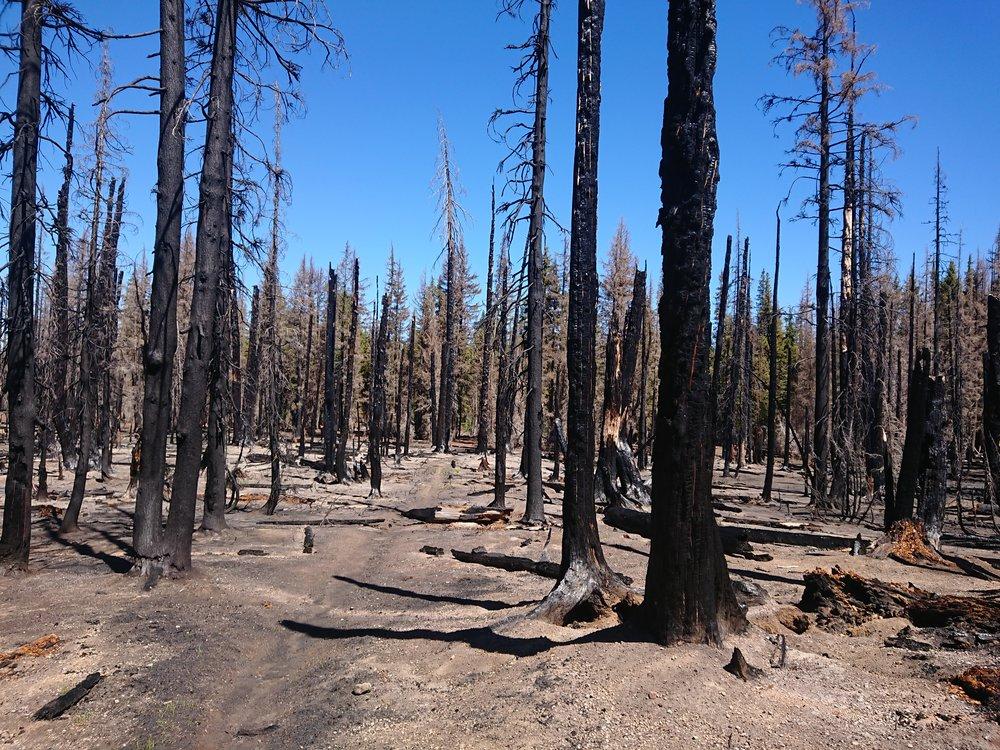 Large burn area before Mazama Village