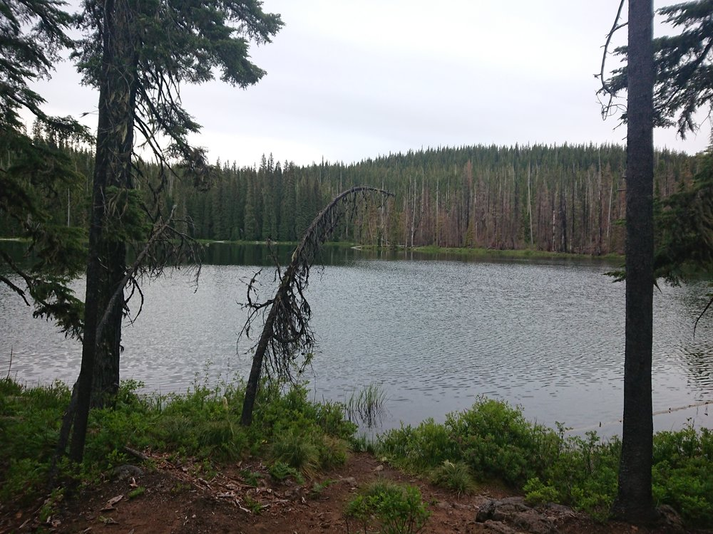 The horrible mosquito lake I camped at