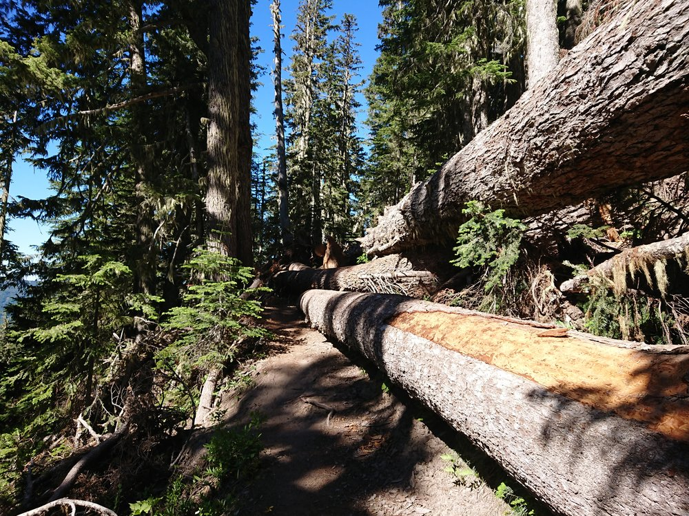 Massive deadfall on the trail