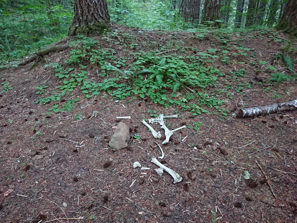 Bones at my campsite, is that a good sign?