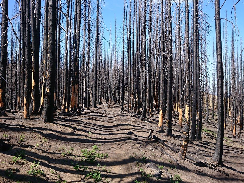 So many burned trees today