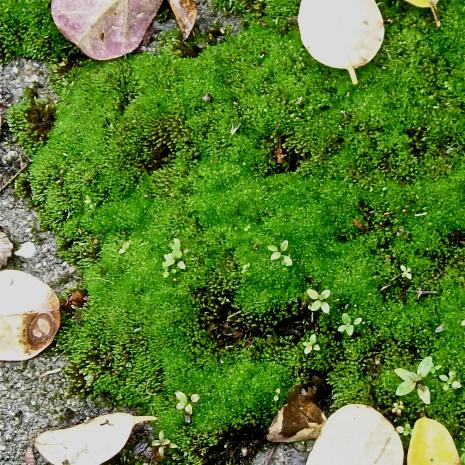 Moss Smiley, 1.jpg