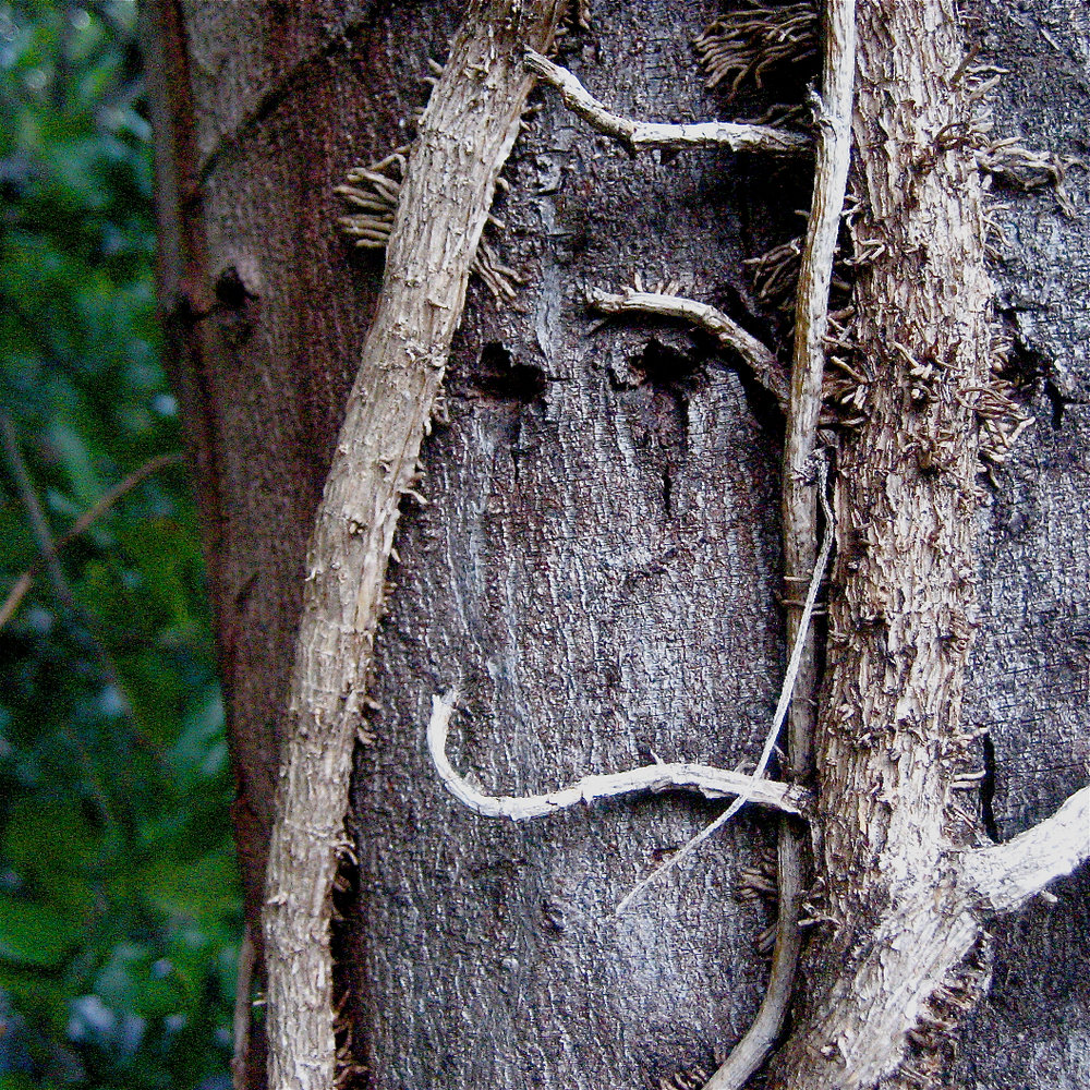 Viney Tree Smiley, 1.jpg