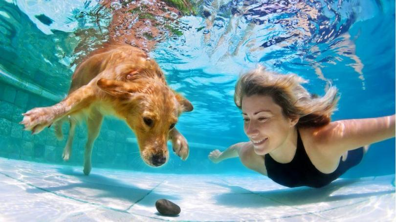 Dog and Woman underwater
