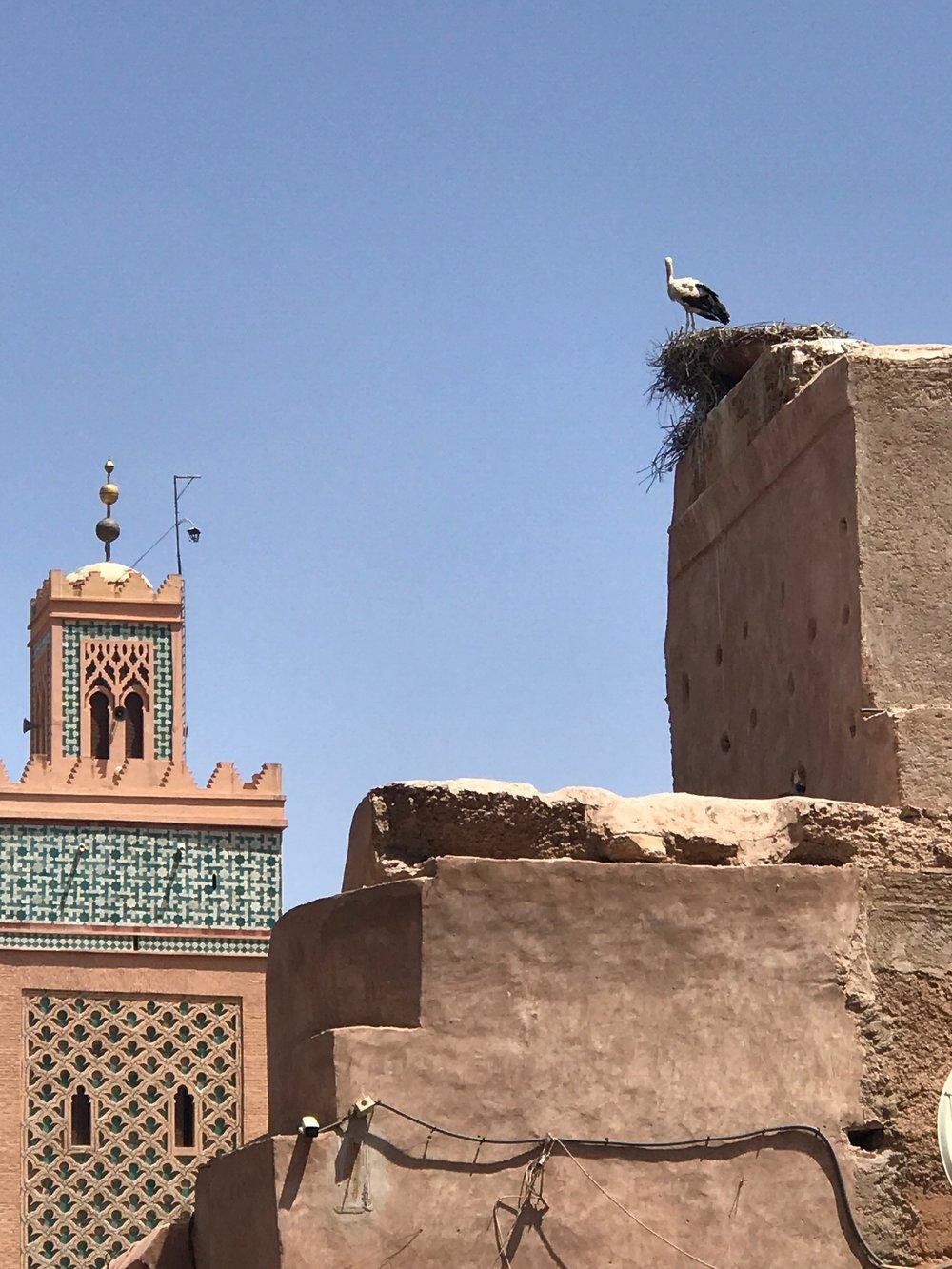 Kig op og få øje på de mange storke i Marrakech