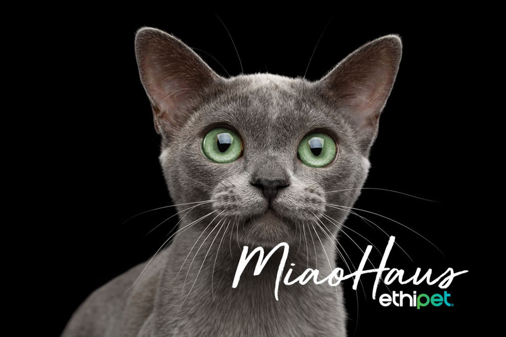 EP MiaoHaus cat (white).png