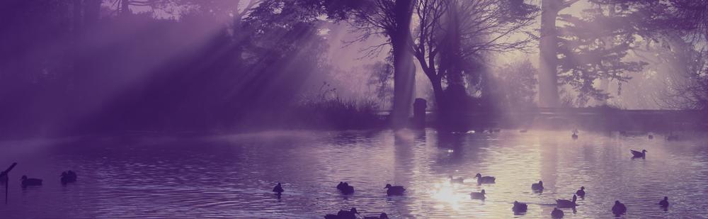 crepuscular-ducks.png