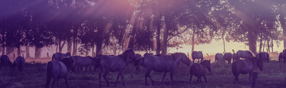 crepuscular-horses.png