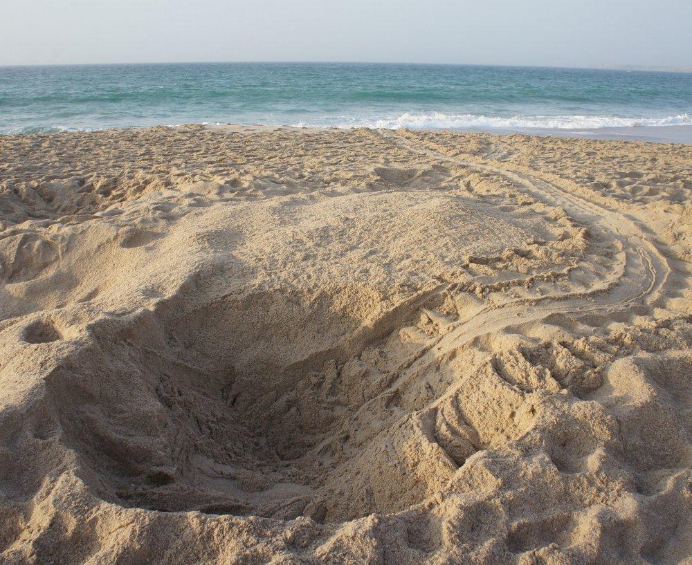turtle nest 1.jpg