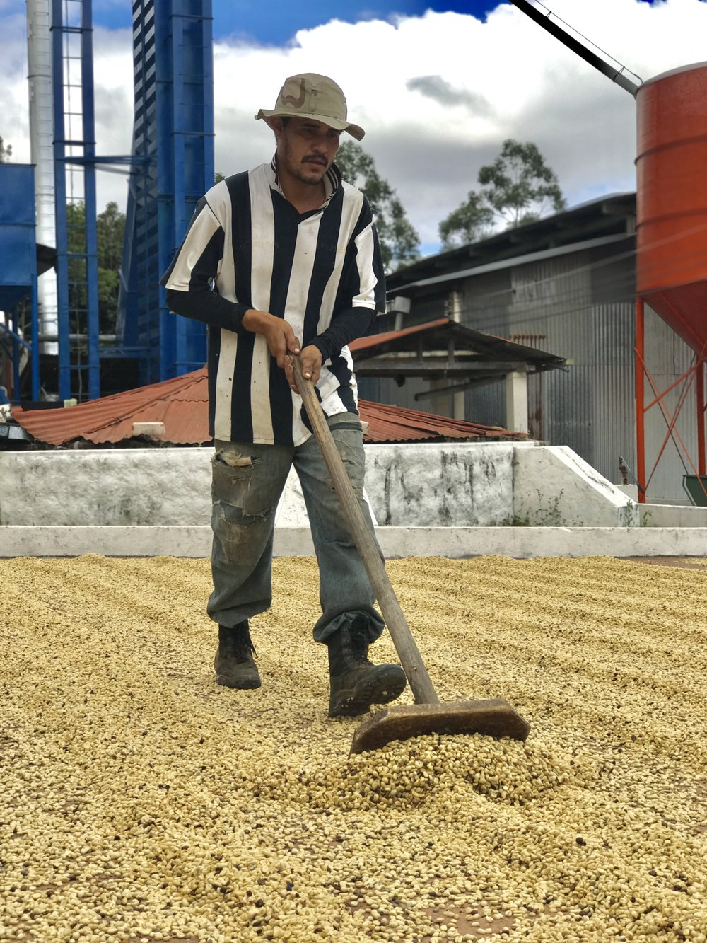 Raking/drying coffee in El Salvador