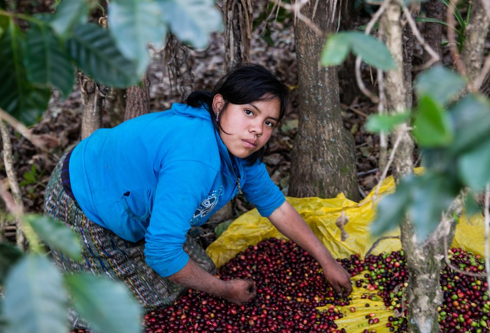 Coffee girl - Guatemala